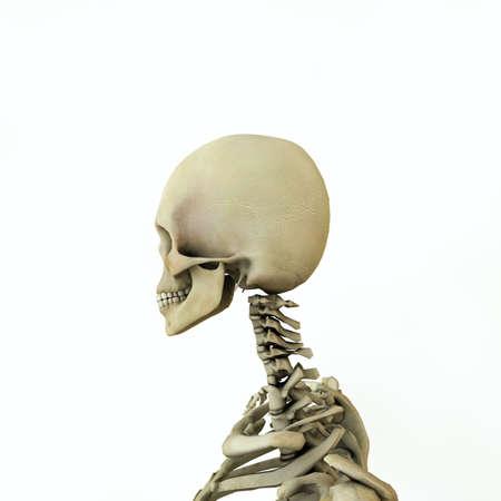 women anatomy model isolated on white background 3d illustration Standard-Bild - 132031817
