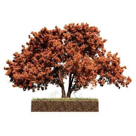 oak tree on sliced squared piece of earth 3d illustration