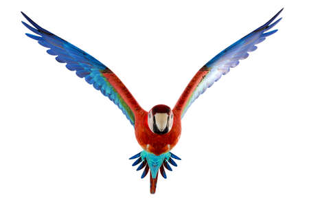 guacamaya isolated on white background 3d illustration Stok Fotoğraf