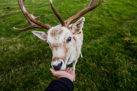 enveloping: Close encounter with a deer