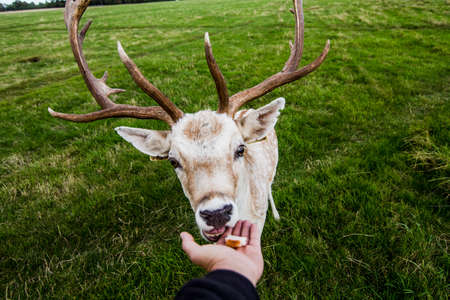 Close encounter with a deer photo