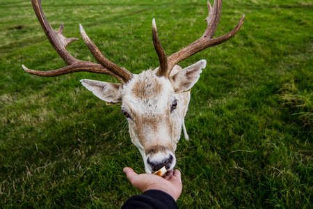 servile: Close encounter with a deer