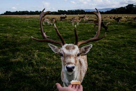 innate: Incontro ravvicinato con un cervo