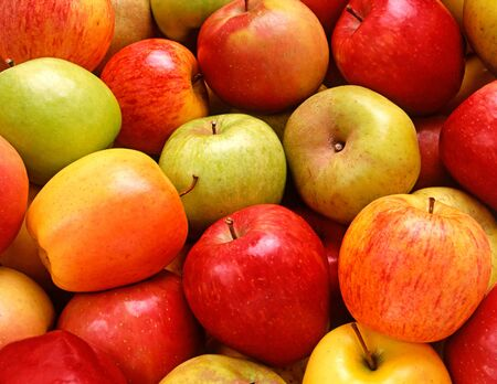 Freshly harvested juicy crisp red and golden dessert apples on display at a farmers market Stock Photo - 15471621