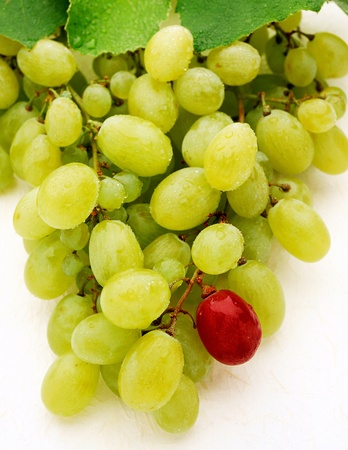 Bunch of fresh sweet green table grapes with one single dark aged grape at the bottom of the bunch Stock Photo - 15471680