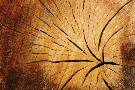 Abstract background texture and pattern of old cracked timber with radiating cracks and woodgrain detail photo