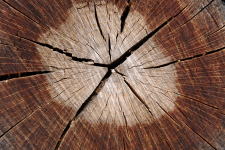 Abstract background texture of a cracked tree trunk cross-section with a mutlitude of cracks radiating from the central light heartwood photo
