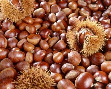 A background of sweet chestnuts showing chestnuts that have been shelled with occasional nuts still in the prickly outer cases Stock Photo - 17474610