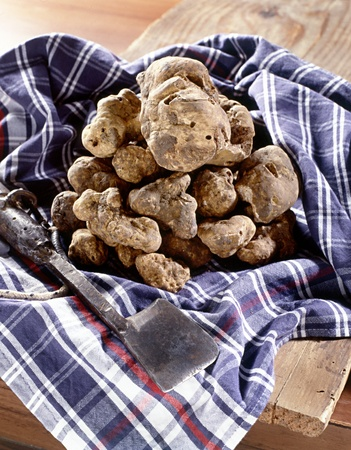 subterranean: Pile of fresh white truffles, a subterranean fungus used as a gourmet ingredient for flavouring in cooking, on a napkin Stock Photo