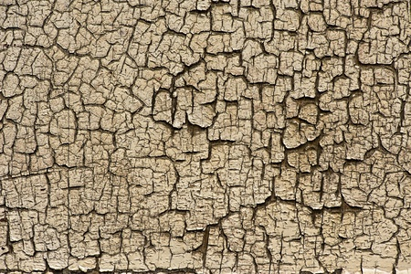 desiccated: Dry desiccated section of wood with a myriad of cracks forming an ornamental tracery or pattern in this wood texture background