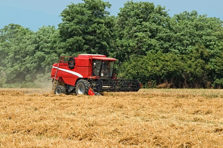 recently: An agricultural thresher or combine harvester working in a recently cut wheatfield harvesting the wheat