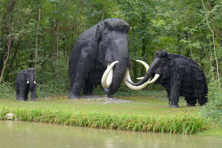 Reconstructed model of a small herd of prehistoric mammoths, the ancestor of the elephant, standing on a forested river bank