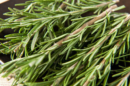 potherb: Sprigs of fresh rosemary, an aromatic potherb used as a seasoning in cooking, especially popular for meat dishes