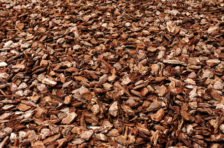 Cortex or wood chip background texture with small chips of natural wood to be used as a soil covering for mulch in the garden Stock Photo