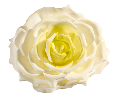 Perfect Delicate Fresh White And Yellow Rose Symbolic Of Love