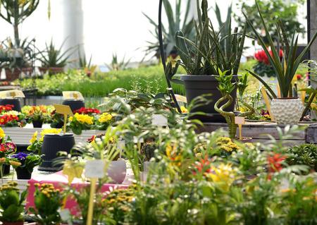 ornamental horticulture: Various Healthy Blooming Flowering Plants on Pots Growing in a Nursery