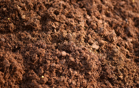 Close up background texture of rich brown fertile topsoil full of nutrients for young plants