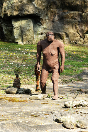 australopithecus: Statue of a, Australopithecus Afarensis, known as one of the longest-lived and best-known early human species, Standing at Rocky Ground at the Park.