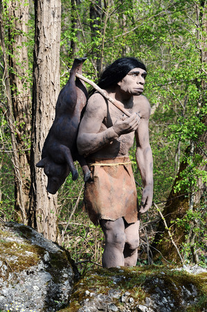 Model of Neanderthal Hunter, an Extinct Species of Human, Carrying Pig Over Shoulder Outdoors in Theme Park Stock Photo
