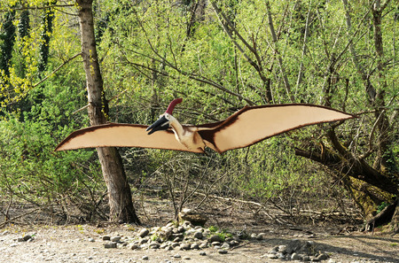 cretaceous: Full Length of Pteranodontidae Cretaceous Winged Dinosaur Model with Outstretched Wings in Pre-Historic Theme Park