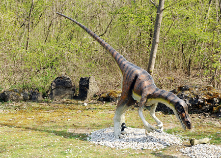leaning forward: Profile of Model of Velociraptor Dinosaur Leaning Forward Towards Ground in Outdoor Pre-Historic Theme Park
