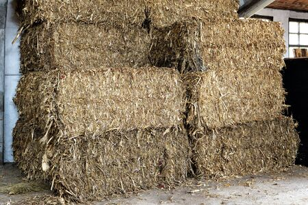 barns winter: Stacked rectangular hay bales in an agricultural barn ready for use as winter feed for livestock or as bedding in a barn