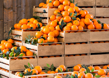 wood agricultural: Stacked wooden crates of fresh ripe oranges on display at a farmers market or store from a freshly harvested agricultural crop