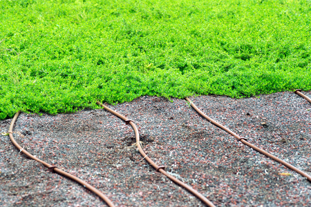 Irrigation pipes on a lawn or turf to provide a fine mist or spray from pressurized nozzles to irrigate plants