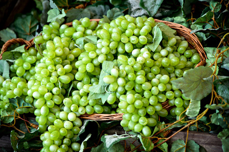 wine making: Display of bunches of fresh white or green grapes in a wicker basket at a farmers market, winery or tavern for use as table grapes or in wine making Stock Photo