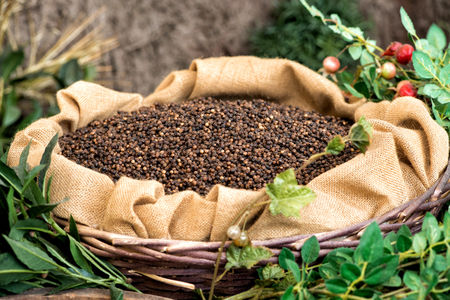 pepe nero: Rustico display di pepe nero in grani secchi da macinare e utilizzato come spezia pungente e aromatizzanti in cucina, visualizzato in un sacchetto di tela di iuta aperto in un cesto di vimini circondata da fogliame