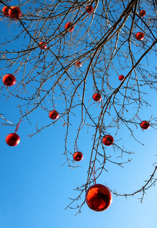 red christmas ball: Outdoor decorated Christmas tree with its bare branches hung with colorful red Xmas baubles to celebrate the holiday season against a blue sky background