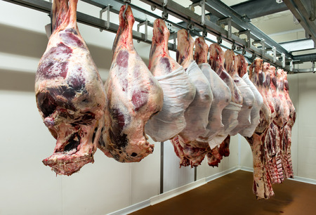 Large pieces of raw butchered meat hanging from metallic racks in food processing plant refrigeration room