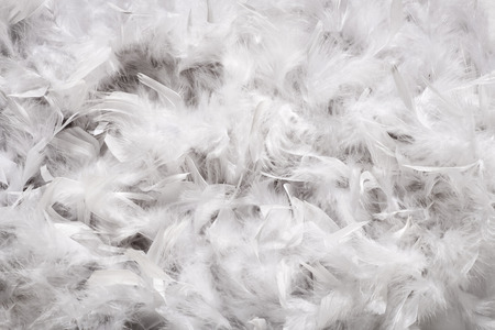 Background texture of a thick layer of soft white down feathers, probably from a duck or goose, viewed full frame from above Archivio Fotografico