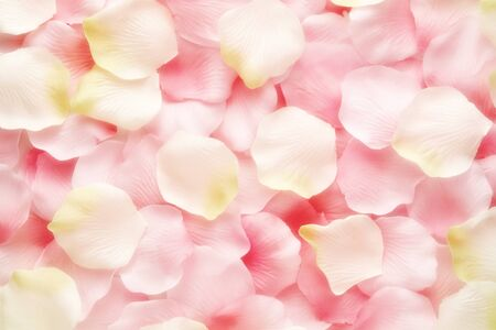 Background texture of soft pink and white rose petals in a random mix viewed as a layer from overhead symbolic of love, romance and perfumery