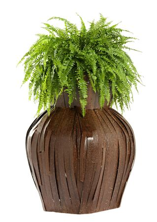 flower box: Interesting bulbous wooden flower box with a lush green fern growing in it isolated on white
