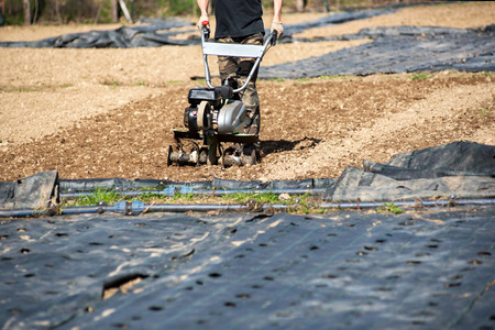 Man using a mechanical hoe or rotovator to turn and till the soil on a farm ready for the transplanting of the seedlings for the spring crop Stock Photo