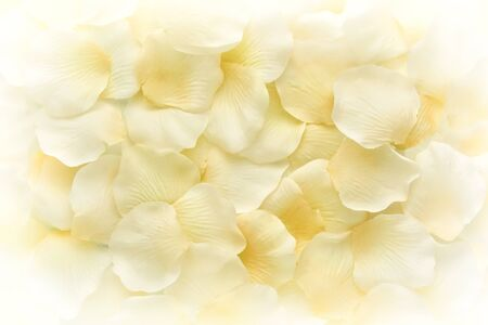 Background texture of natural pale yellow flower petals piled loose in heap on a white background viewed from above in soft light