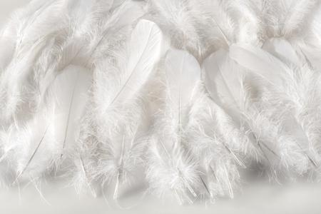 Schicht von weichen flauschigen weißen Vogelfedern über einem passenden weißen Hintergrund für eine empfindliche digitale Textur