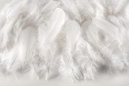 Layer of soft fluffy white bird feathers over a matching white background for a delicate monochromatic texture