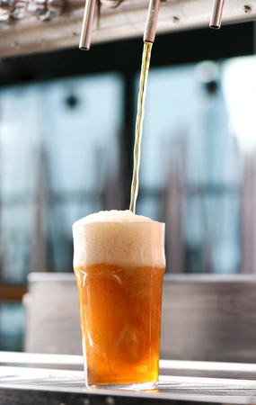 Drafting a glass of chilled draft beer from a tap in a pub in a low angle view of the liquid pouring into the glass