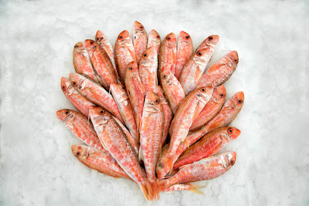 Heap of fresh mullets fish lying in ice