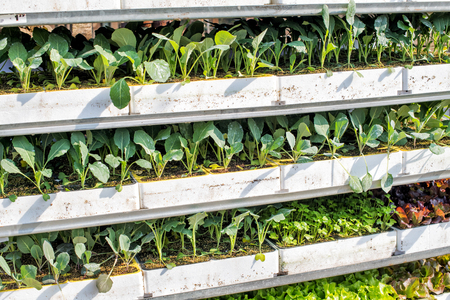 Trays of assorted young green seedlings in a nursery or farm ready to be transplanted into the field in spring in a close up full frame view