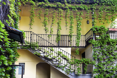 Ivy creeper plants hanging from the roof and spread around stairs and balcony on the courtyard of residential house with yellow walls Reklamní fotografie