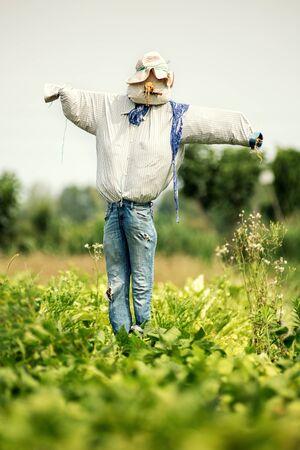 Espantapájaros realista en jeans viejos y sombrero en un campo agrícola visto a través de un frondoso cultivo verde para asustar a los pájaros Foto de archivo