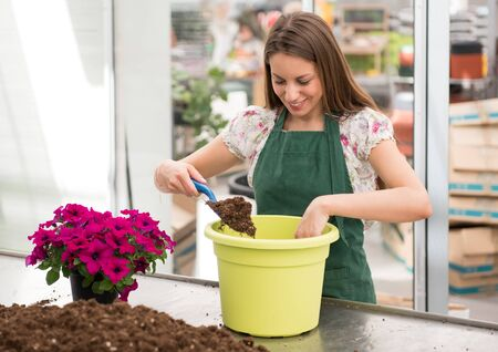 Happy young nursery worker potting a colorful purple petunia or surfinia plant into a large green pot filling it with potting soil using a small trowel