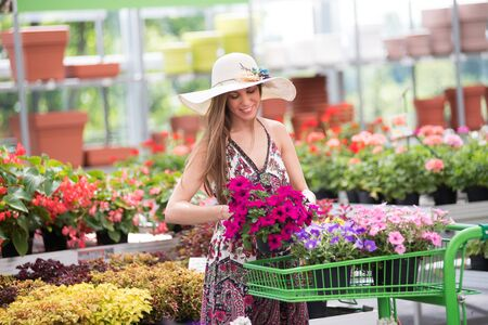 Trendy chic young woman placing colorful purple petunia flowers in a shopping cart in a nursery with a happy smile as she selects her purchases