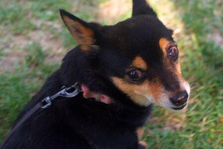 small dog Standard-Bild