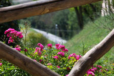 hill in bloom