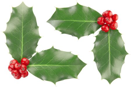 holly leaves: Holly border isolated on white