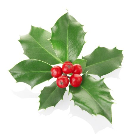 holly berries: Holly twig isolated on white
